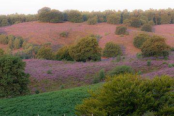 Farbpalette der Heide von Tania Perneel