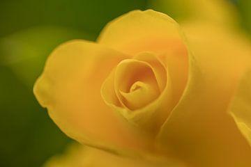 Gele Roos van Marianne Twijnstra-Gerrits
