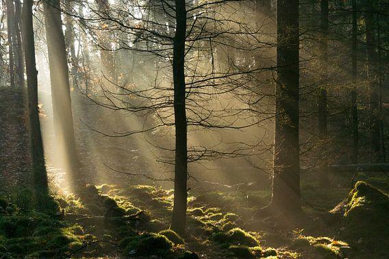Zonnestralen in het donkere bos van Sjoerd van der Wal