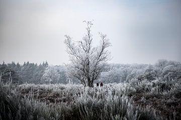 Winterse rijp von Vincent Snoek