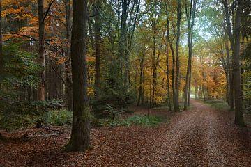 Herbst im Wald von Dieter Beselt