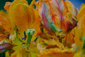 Wilde tulp von Jellie van Althuis