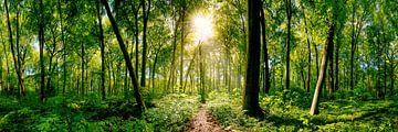 Groen bos van Günter Albers