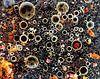 Assorti van azijn en olie,  gemengd, close-up van Beeldig Beeld thumbnail