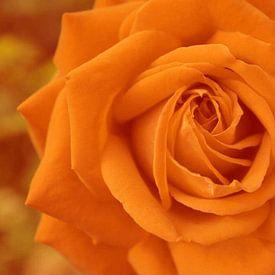Rose - digital bearbeitet von Babetts Bildergalerie