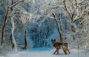 wolf in de sneeuw von H.m. Soetens