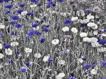 Kornblumenblau van Edgar Schermaul
