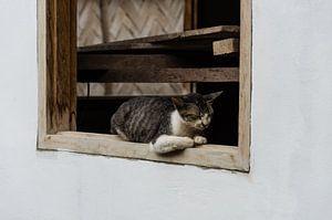Slapende kat op een vensterbank