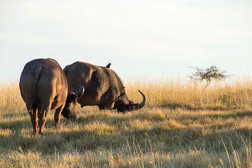 Buffels op de vlakte van Nathalie van der Klei