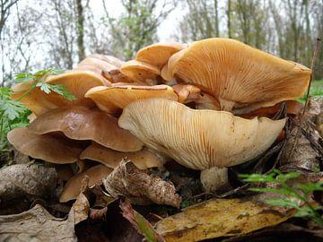 Herfstbeeld met paddenstoelen  van Pieter Korstanje