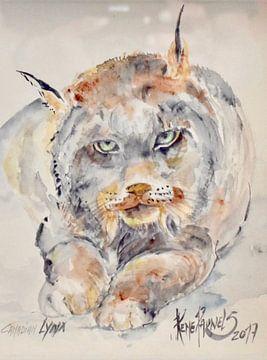 Canadian Lynx van René Pauwels