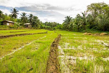 Reisfelder von Nicole Nagtegaal