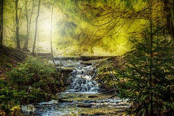 Im Wald Erzgebirge von Johnny Flash