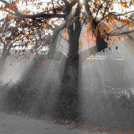 Zonnestralen door een herfstboom in  zwart witcoloursplash van Joyce Derksen