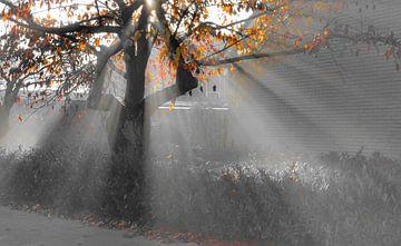 Sonnenstrahlen durch einen herbstlichen Baum in schwarz-weißem Farbtupfer von Joyce Derksen