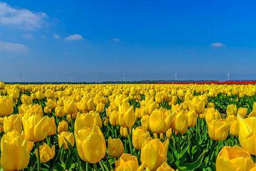 Tulpen veld Flevopolder von Han Kedde