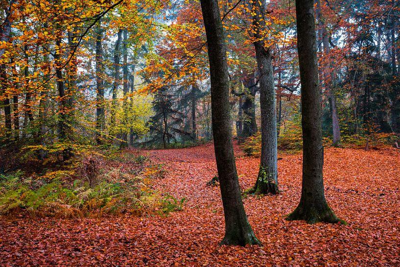Red Carpet van William Mevissen