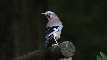 der Vogel von Danny van Zwam