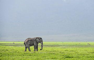 Elefant von Robert Styppa