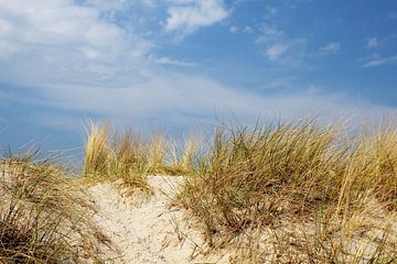 duinen van Ostsee Bilder