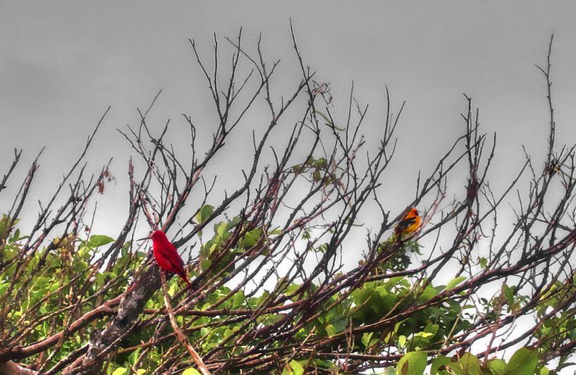 Birds van BL Photography