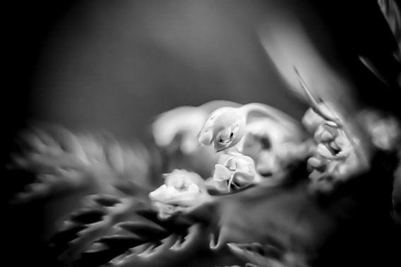 Kwetsbaar bloemetje van Ania Liesting