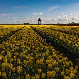 geel tulpenveld van peterheinspictures
