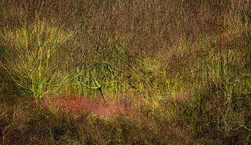 0437 Der Busch von Adrien Hendrickx