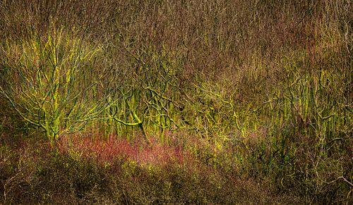 0437 The bush