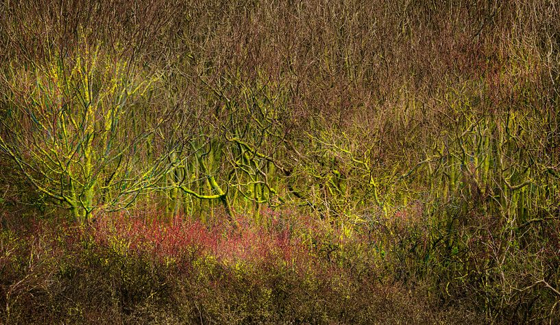 0437 The bush van Adrien Hendrickx