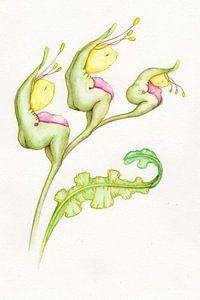 Geelkopjes plant van