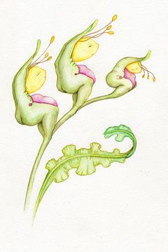 Geelkopjes plant van Anouk Maria van Deursen