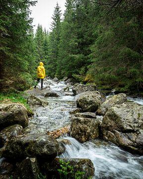 Gele regenjas in de bossen van Slowakije van OCEANVOLTA