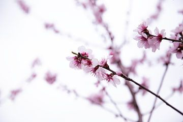 Blüte von Monique de Koning
