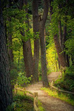 Pad door het bos van Coen Weesjes