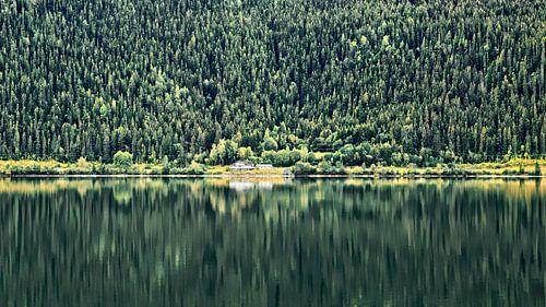 Berg & Bomen reflectie