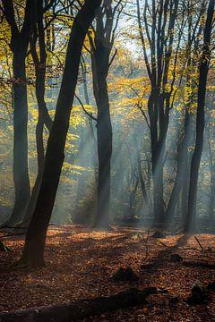 Märchenwald von Eelke Brandsma