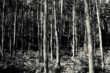 Zon in het bos van Sven Zoeteman