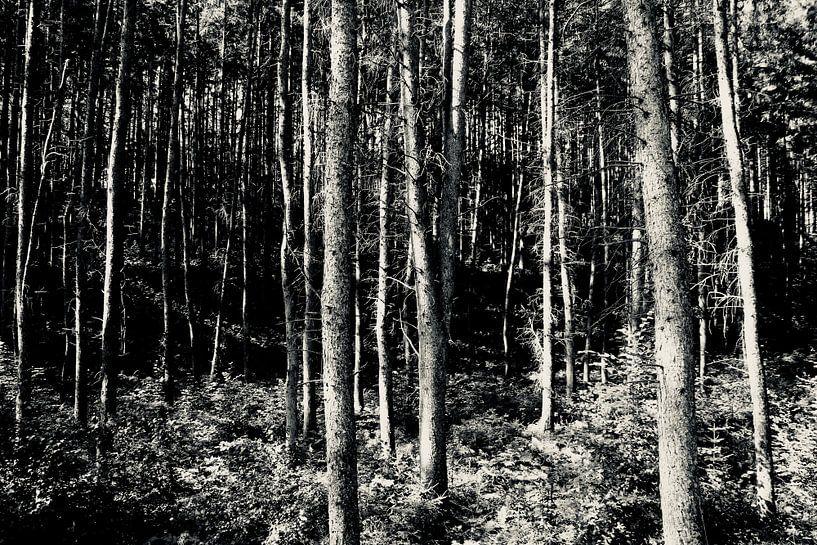 Zon in het bos von Sven Zoeteman