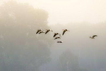 ganzen in de mist van