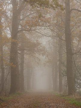 eikenlaan in de mist van Wim vd Neut