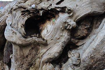 Speld in een boomberg van Marc Van Achte