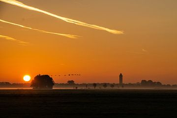 Zonsopkomst met dauw in Alblasserwaardse polder