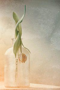 Tulp in verval