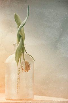 Tulp in verval van Ellen Driesse