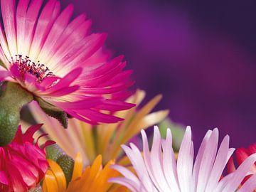 Fleur I - fleurs sur Herma Egberts
