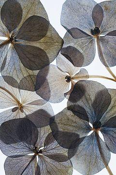 Botanischer # 21, Lenka von 1x