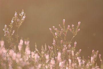 De Bergse Heide in het avondzonnetje van Sabina Meerman