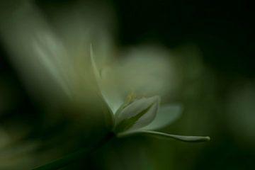 Impression des fleurs sur Birgitte Bergman