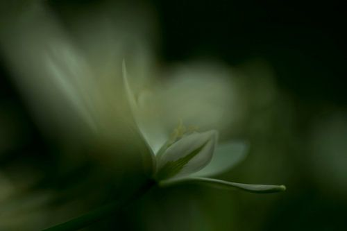 Impression des fleurs van
